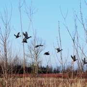 Waterfowl Hunting: 3 Hunting Tools You Should Bring