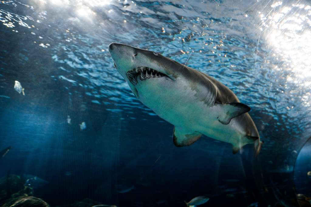 sharks - Come and Take It Sport Fishing